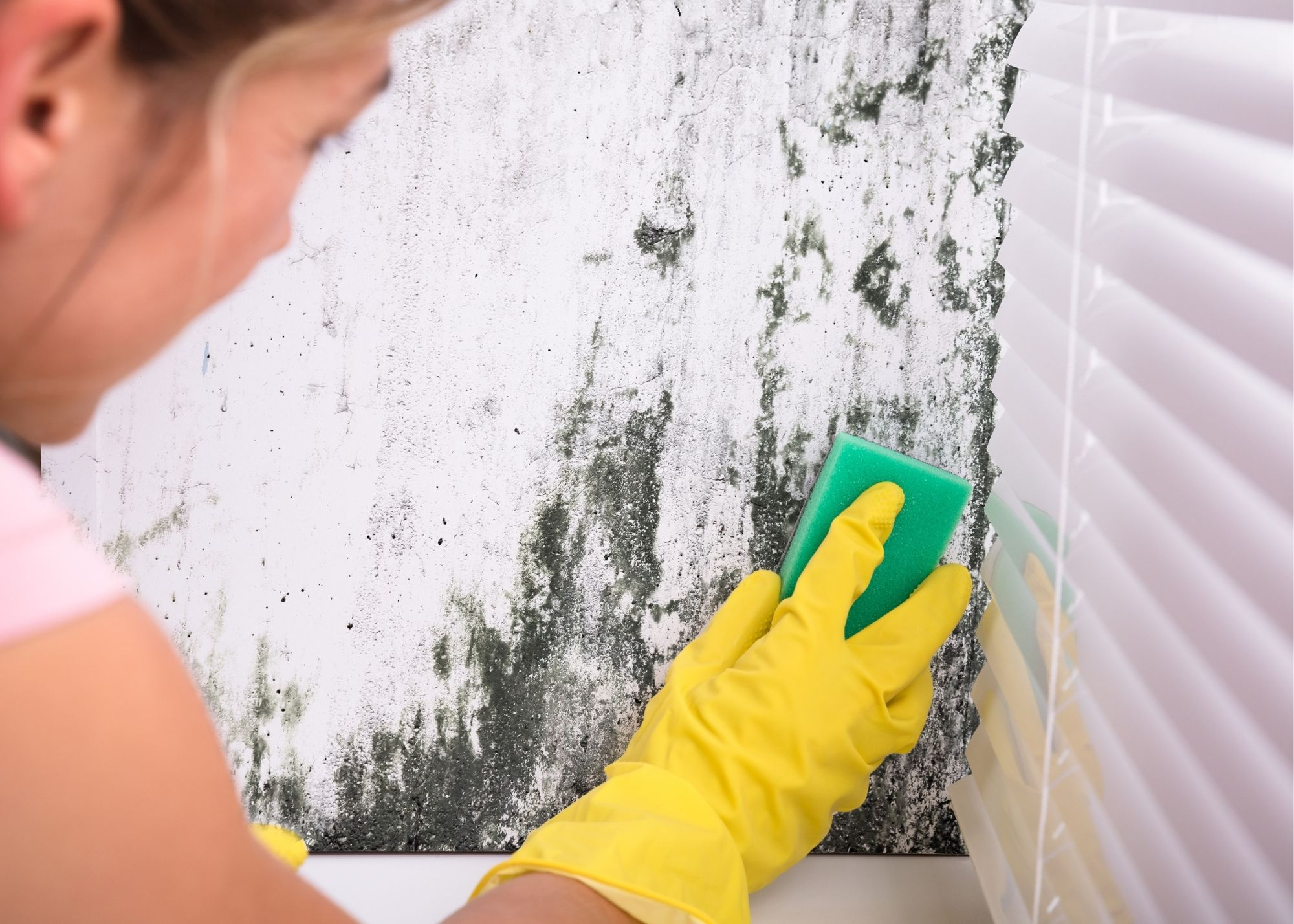 mold removal in Tampa FL