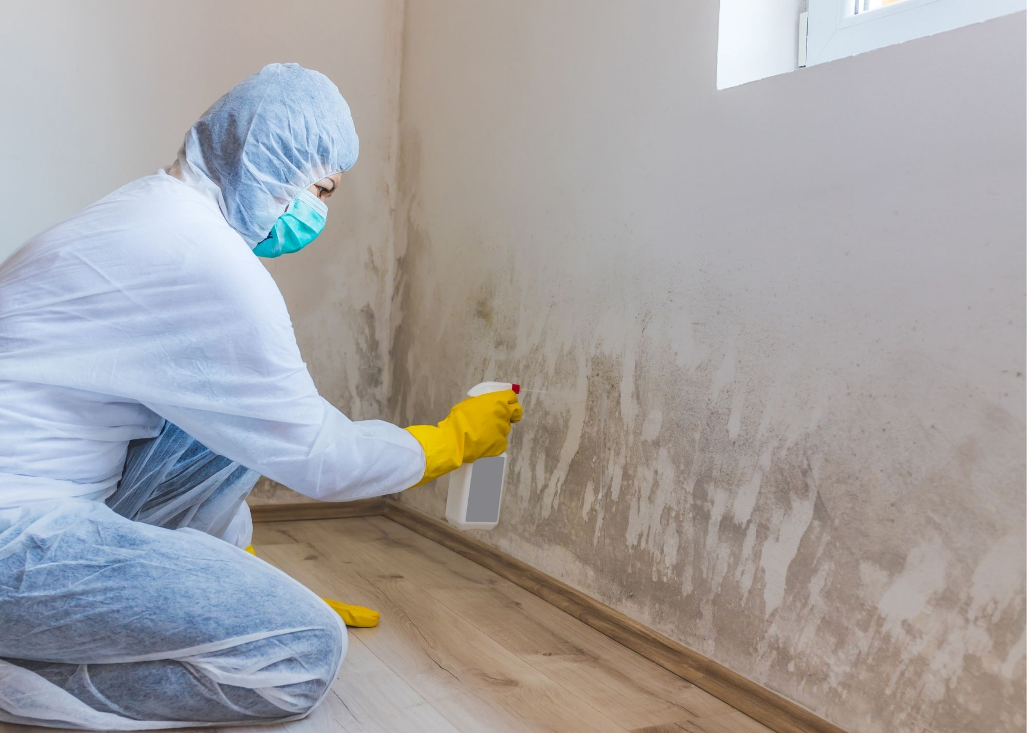 mold removal Tampa