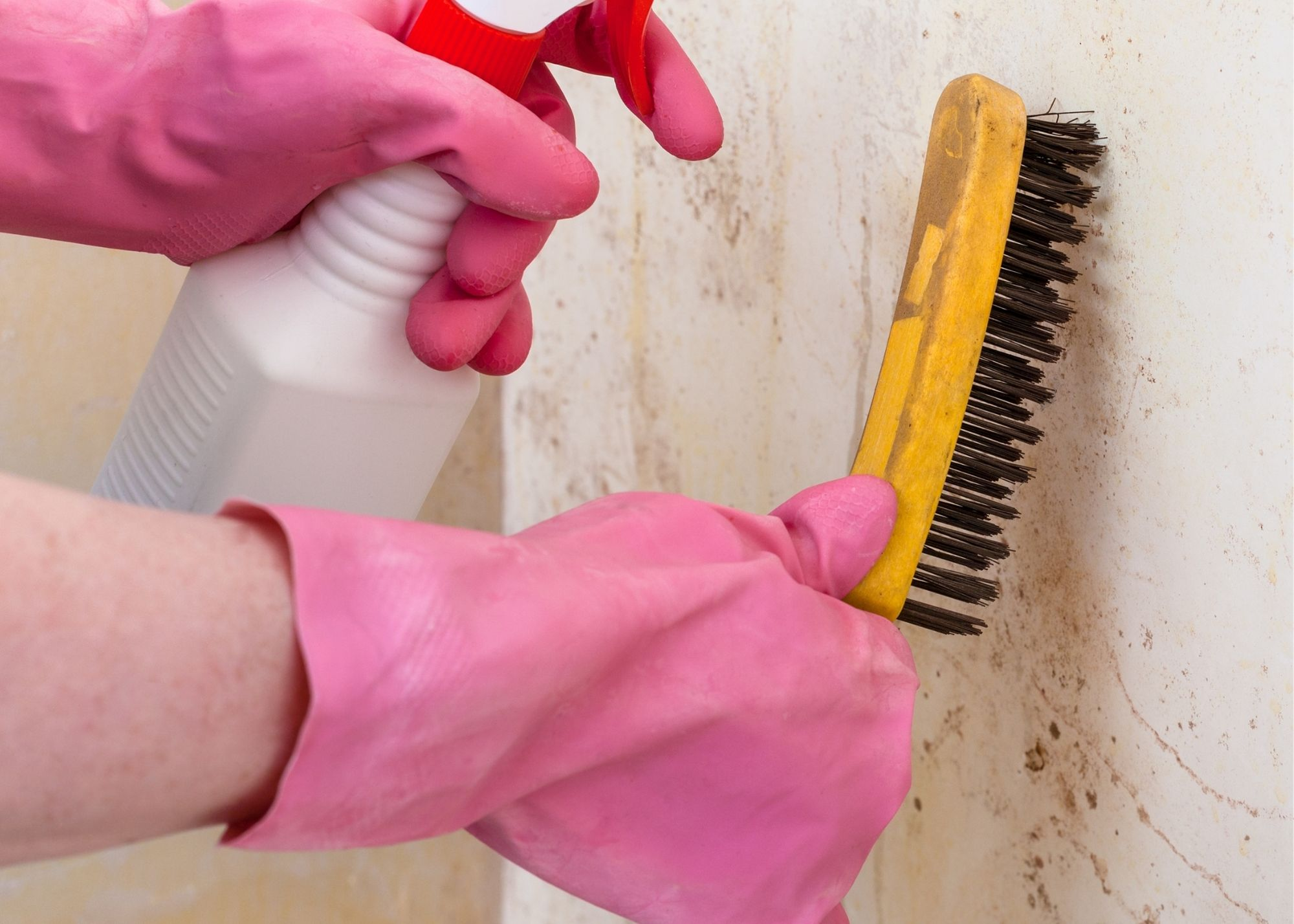 mold inspection Tampa FL